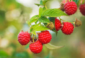 Natural raspberry flavoring